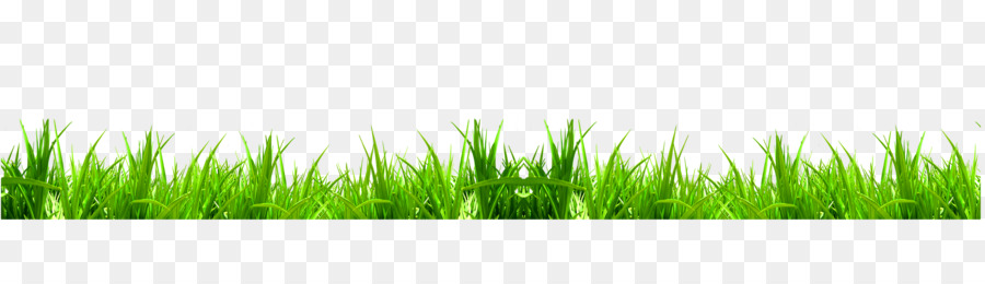 Green Download Weed Icon Fresh Green Grass 5500 1500
