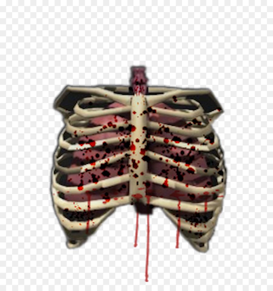 Human skeleton Bone Rib cage Human body - Human Skeleton png ...