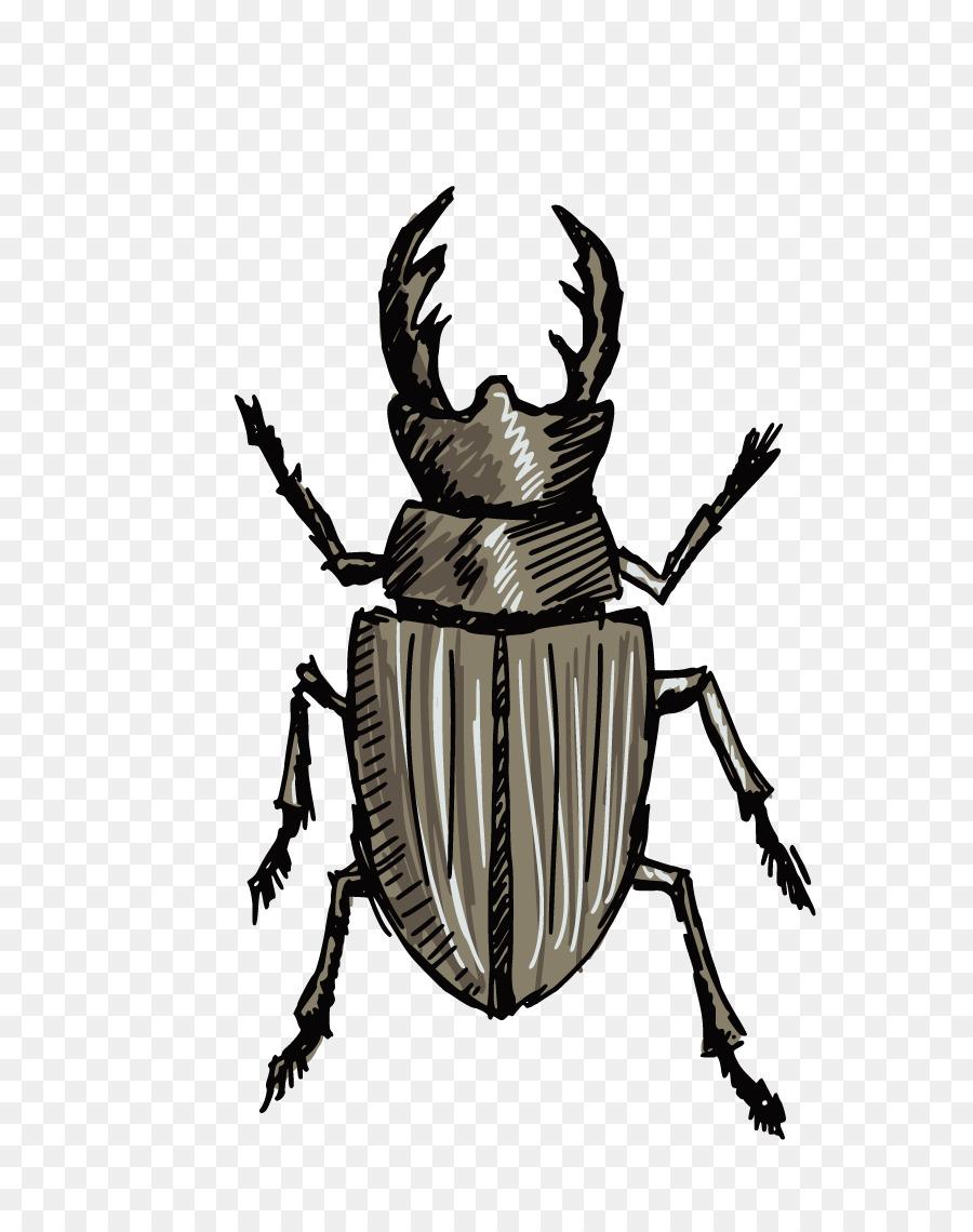 Stag beetle Drawing Clip art - Beetles png download - 876*1140 ...