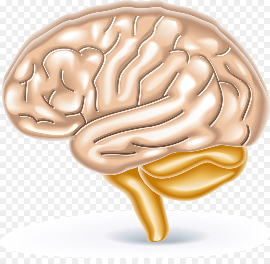 Brain games brain trainer brain games brain teaser 2 school of brain games brain trainer brain games brain teaser 2 school of dragons brain calculator human brain diagram elements ccuart Image collections