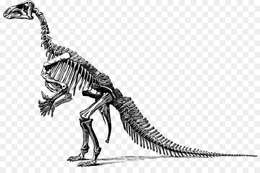 tyrannosaurus triceratops dinosaur fossils clip art dinosaur bones rh kisspng com Cute Dinosaur Clip Art dinosaur bones clipart