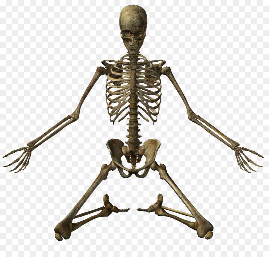 Human skeleton Bone Clip art - Human Skeleton png download - 1163 ...