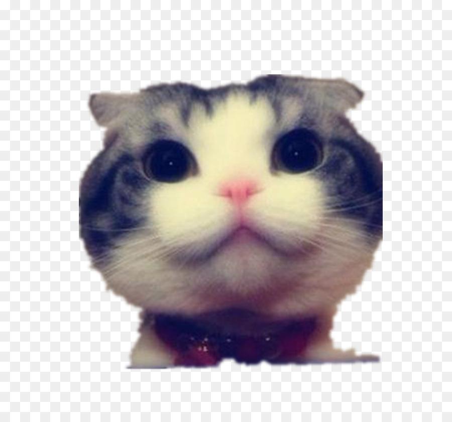 Funny Cat Kitten Dog Big Cat Stay Meng Big Cat Face