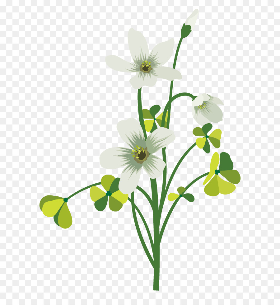 Flower drawing four leaf clover vector green clover petal white flower drawing four leaf clover vector green clover petal white decoration mightylinksfo
