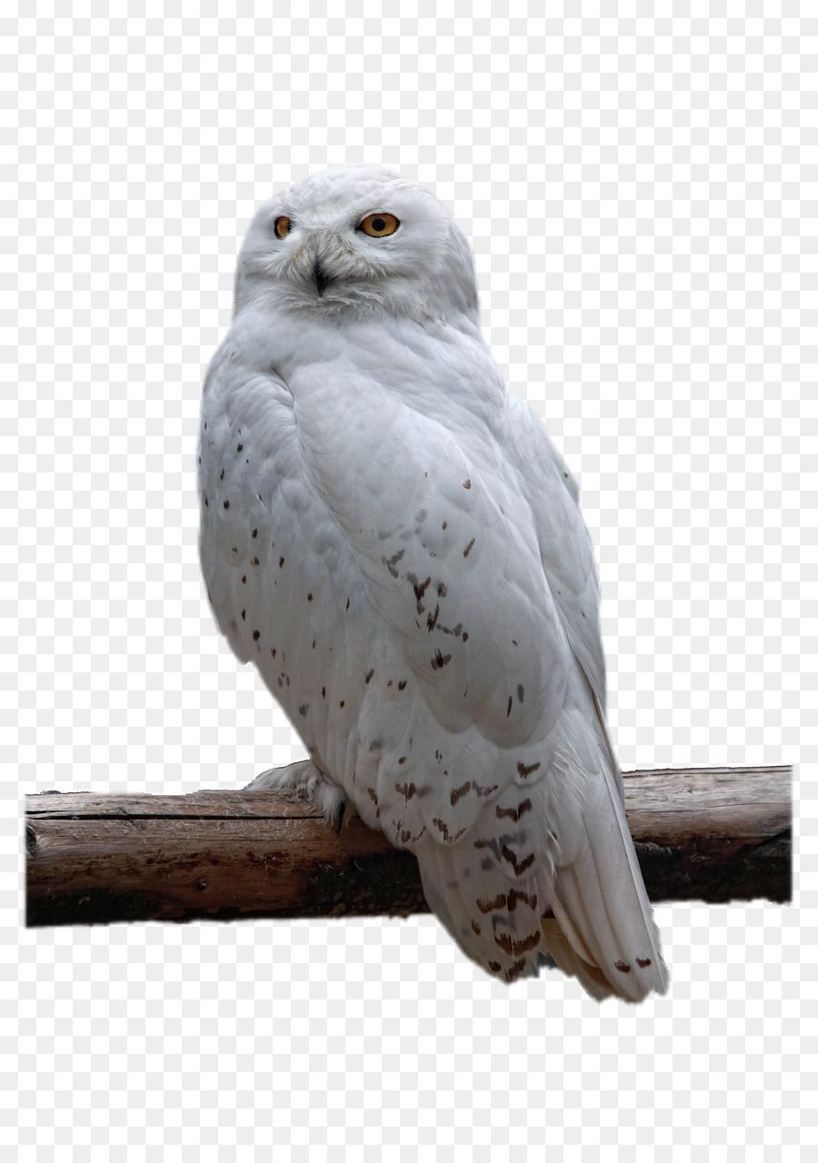 owl bird download white owl png download 853 1280 free