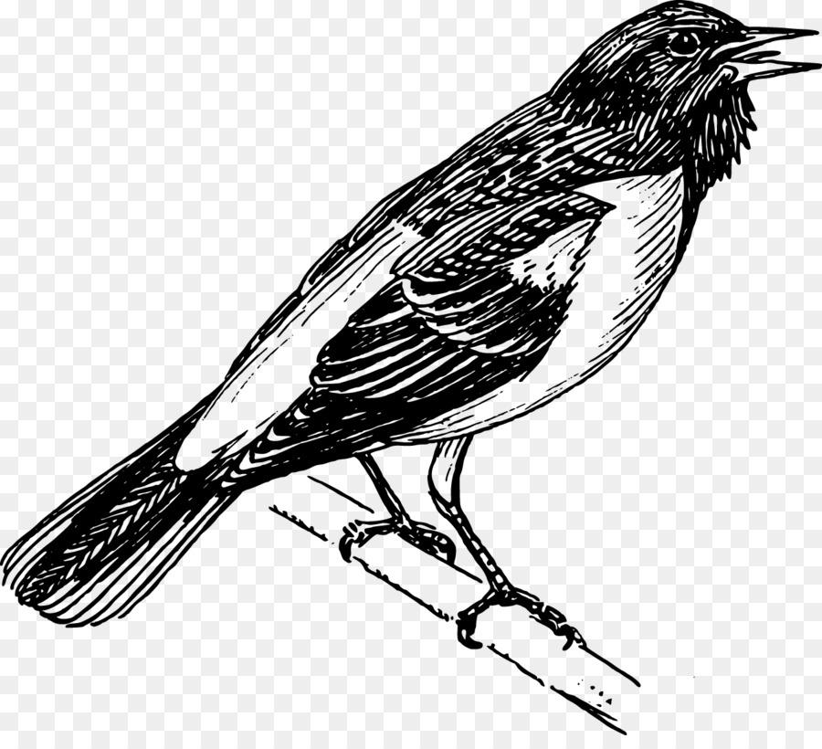 Baltimore Orioles de Aves Clip art - El canto de los pájaros png ...