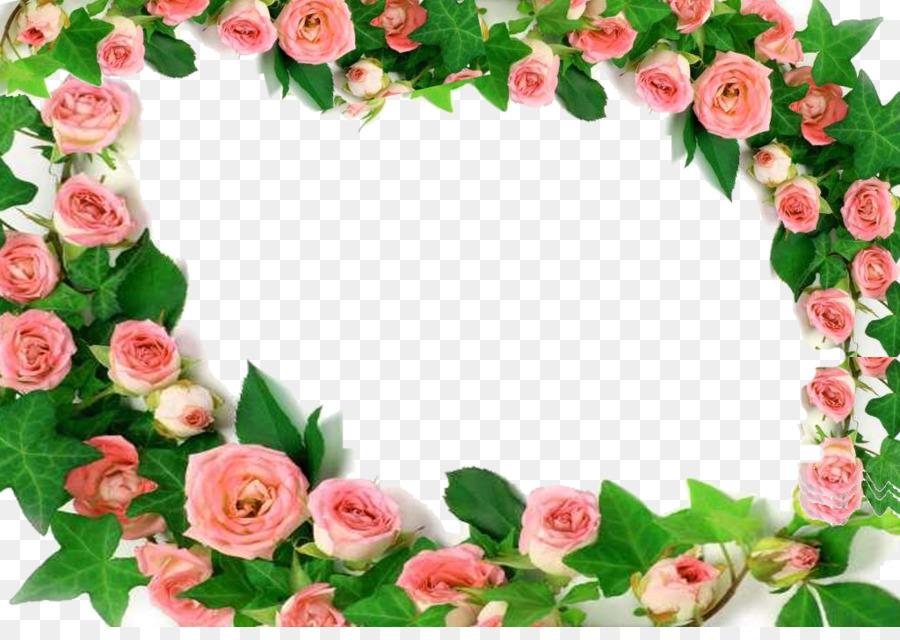 Jardín de las rosas de color Rosa Rosa chinensis Flor - Flor peonía ...
