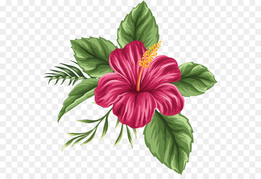 Hawaii Shoeblackplant Drawing Flower Bouquet Hand Painted Hibiscus