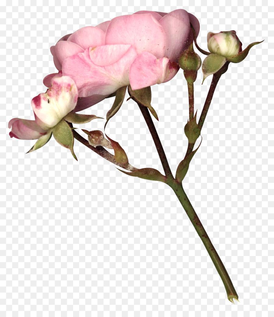 Garden roses fairy tale gothic art flower fairy tale flowers png garden roses fairy tale gothic art flower fairy tale flowers mightylinksfo