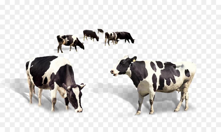Tauro ganado vacuno de leche de la Leche - La vaca lechera Formatos ...