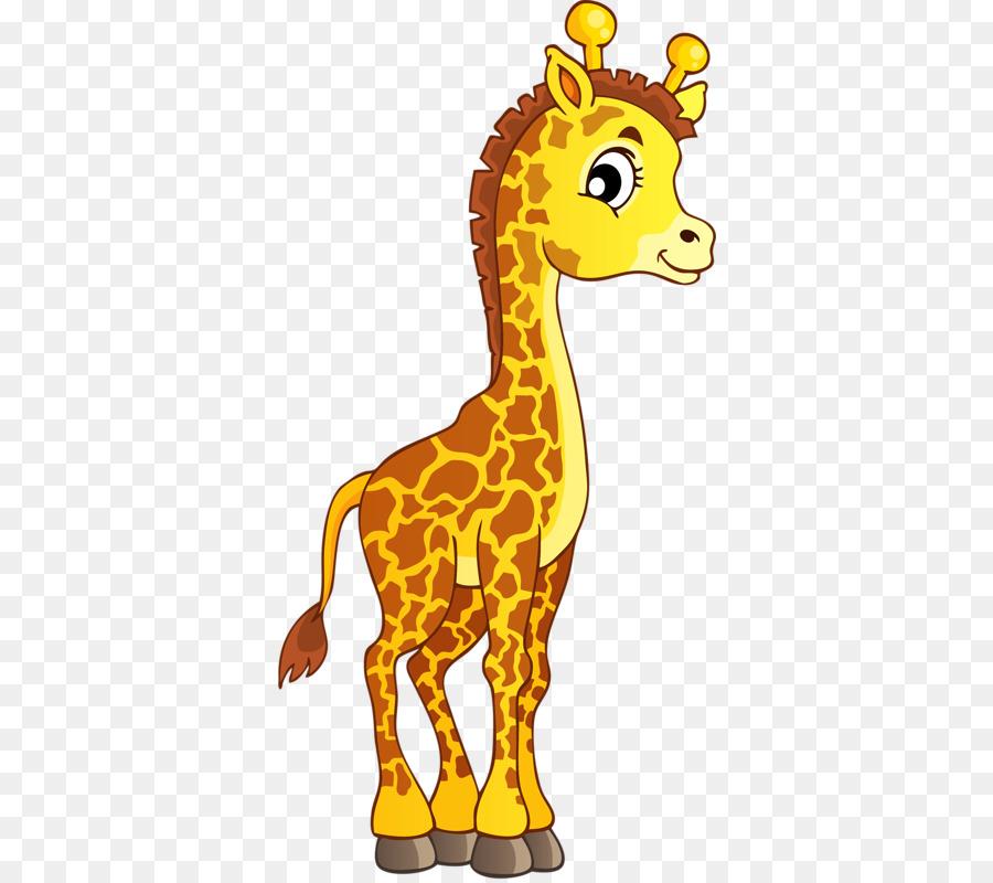 El norte de la jirafa Acerca de las Jirafas de Animales para ...