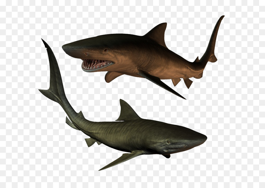 Hungry shark evolution 3. 7. 2 hack +free download youtube.