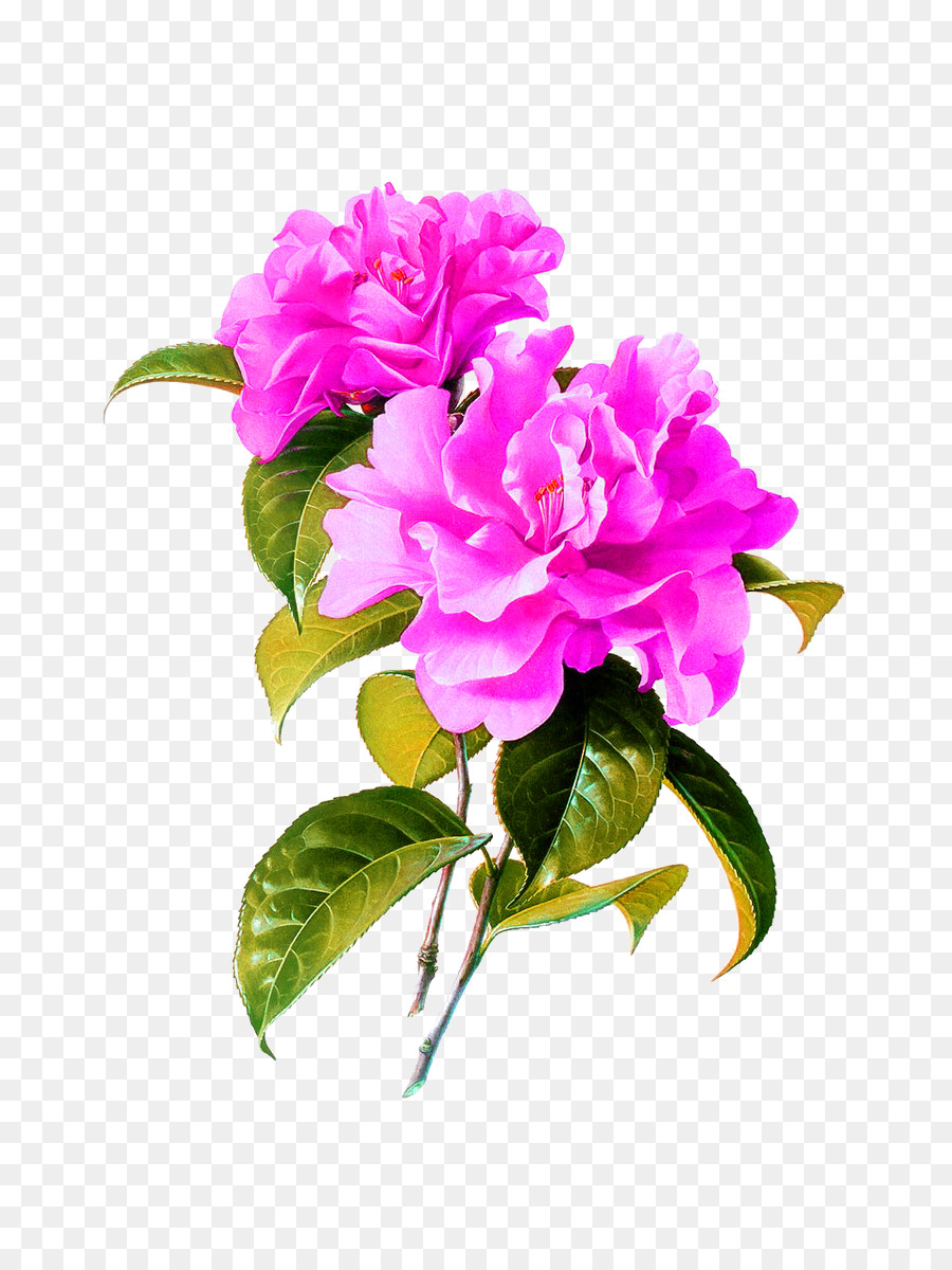 China Watercolor Painting Flower Chinese Painting Peony Png