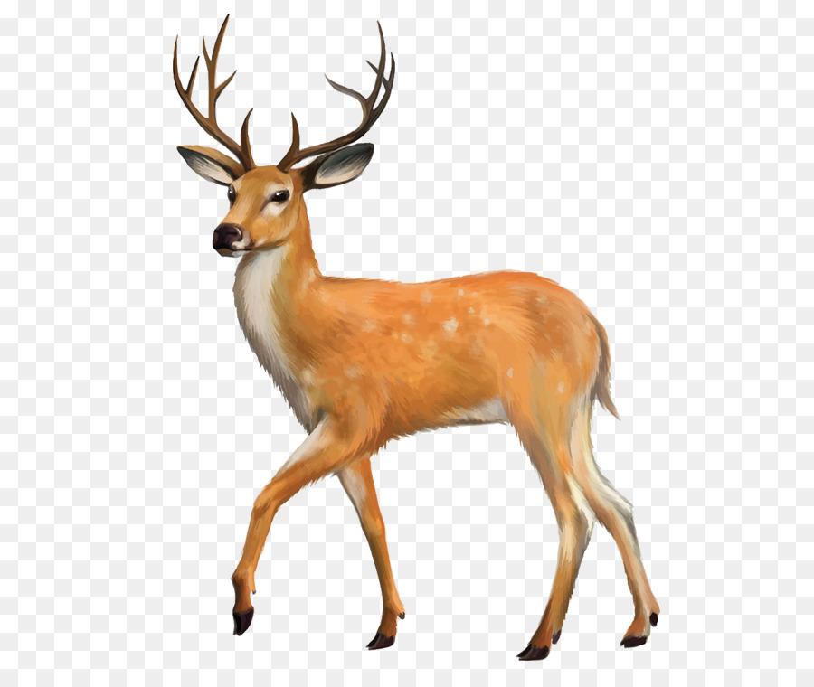 White-tailed deer Red deer Clip art - Deer png download ...