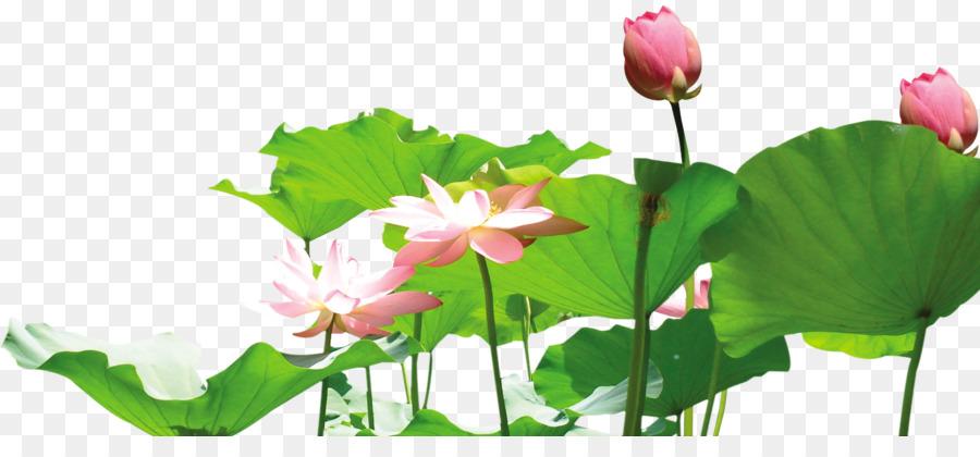 Nelumbo nucifera lotus root clip art lotus png download 1482660 nelumbo nucifera lotus root clip art lotus mightylinksfo