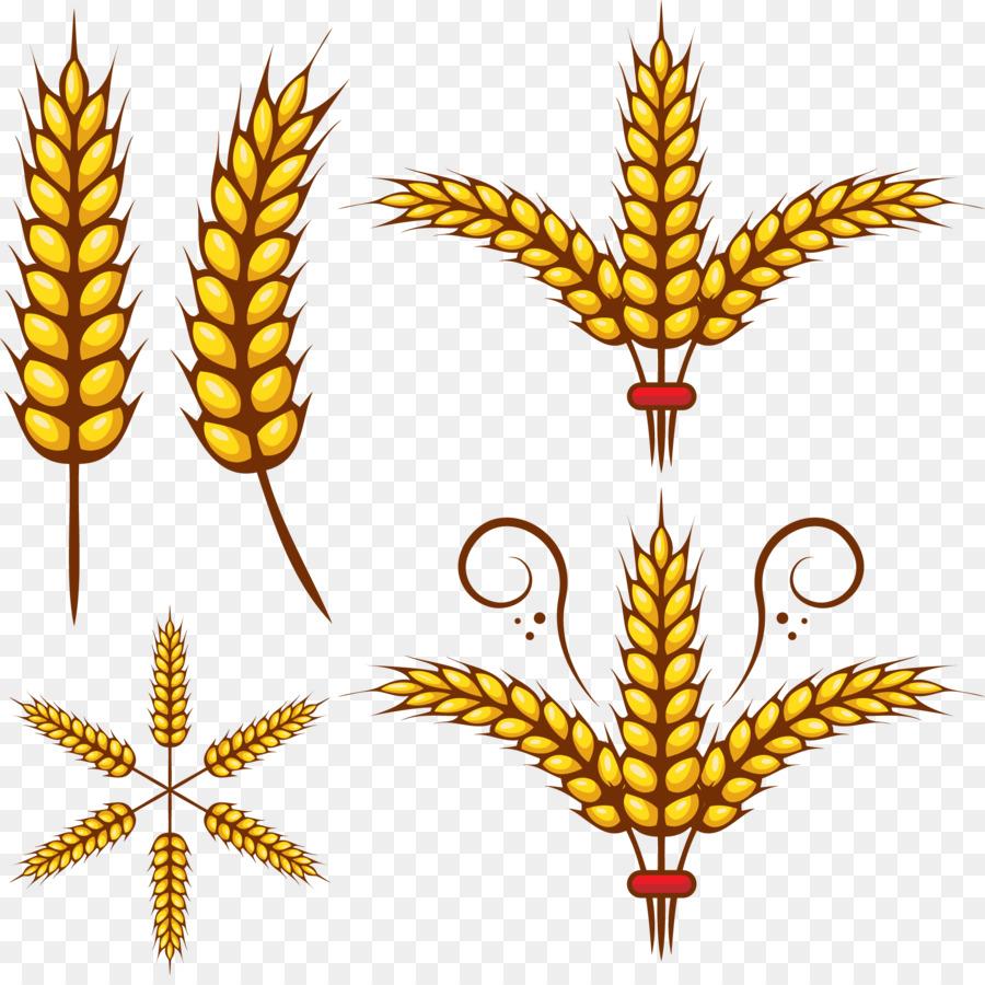 adobe illustrator wheat clip art vector rice png