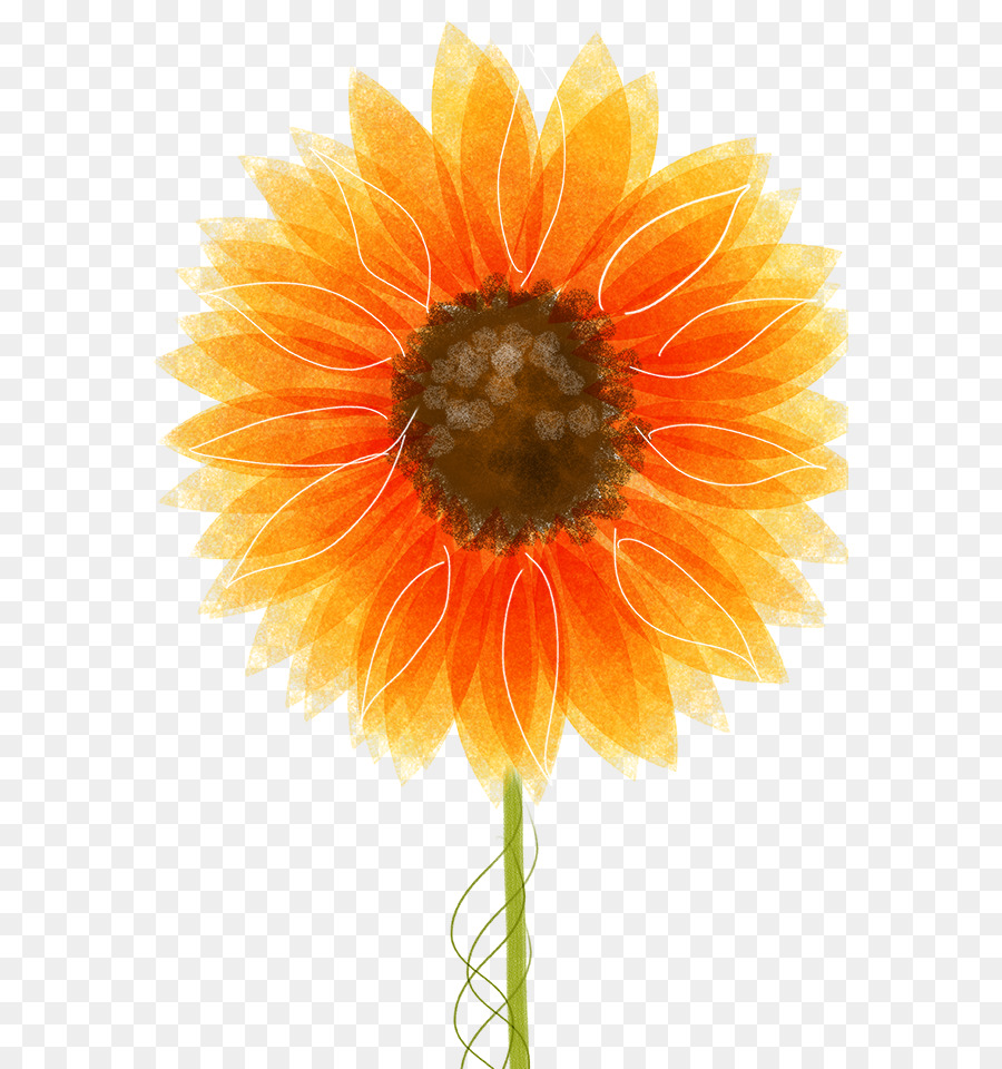 Drawing Common Sunflower Illustration Sunflower Dream Png Download