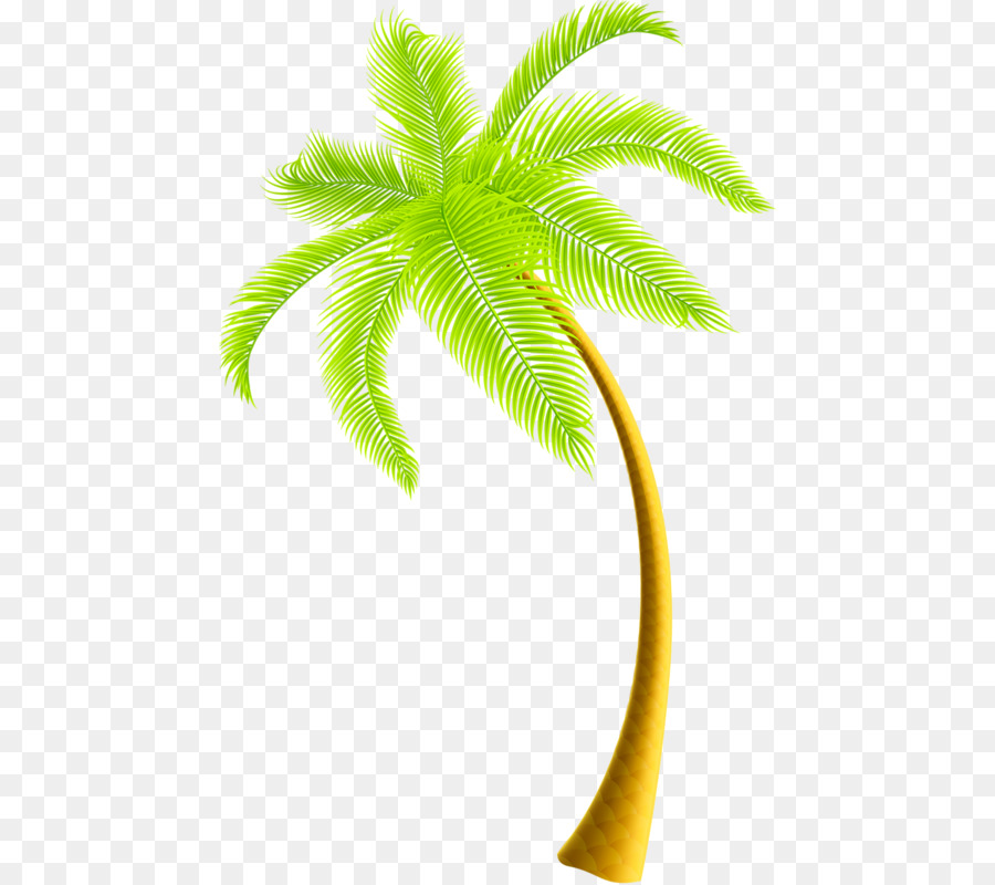 clip art coconut tree png download 504 800 free transparent rh kisspng com coconut tree clip art black and white coconut tree clipart black
