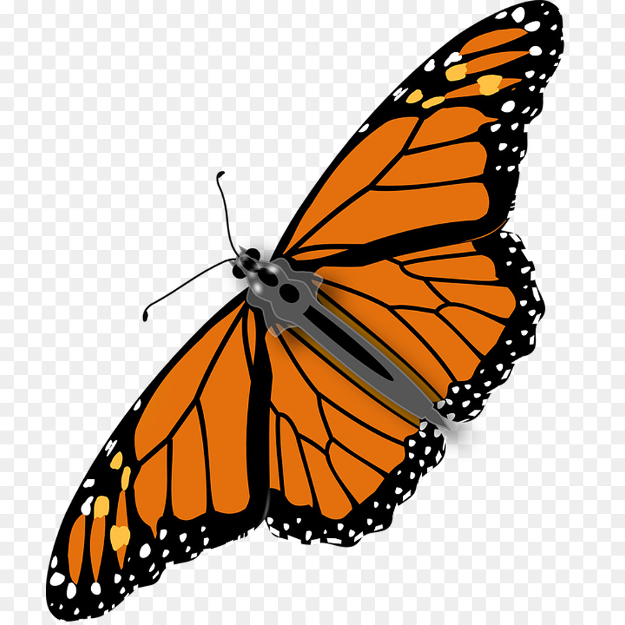 Monarch butterfly insect clip art beautiful butterfly diagram png monarch butterfly insect clip art beautiful butterfly diagram ccuart Images
