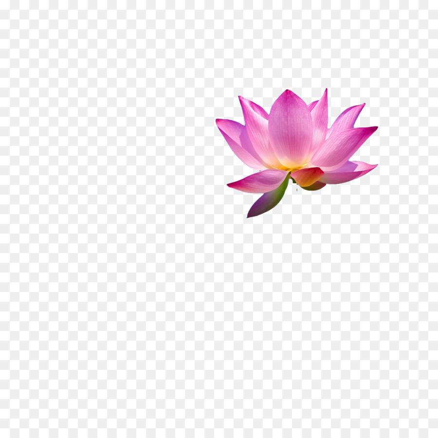 Thai massage pink nelumbo nucifera bright lotus png download thai massage pink nelumbo nucifera bright lotus izmirmasajfo