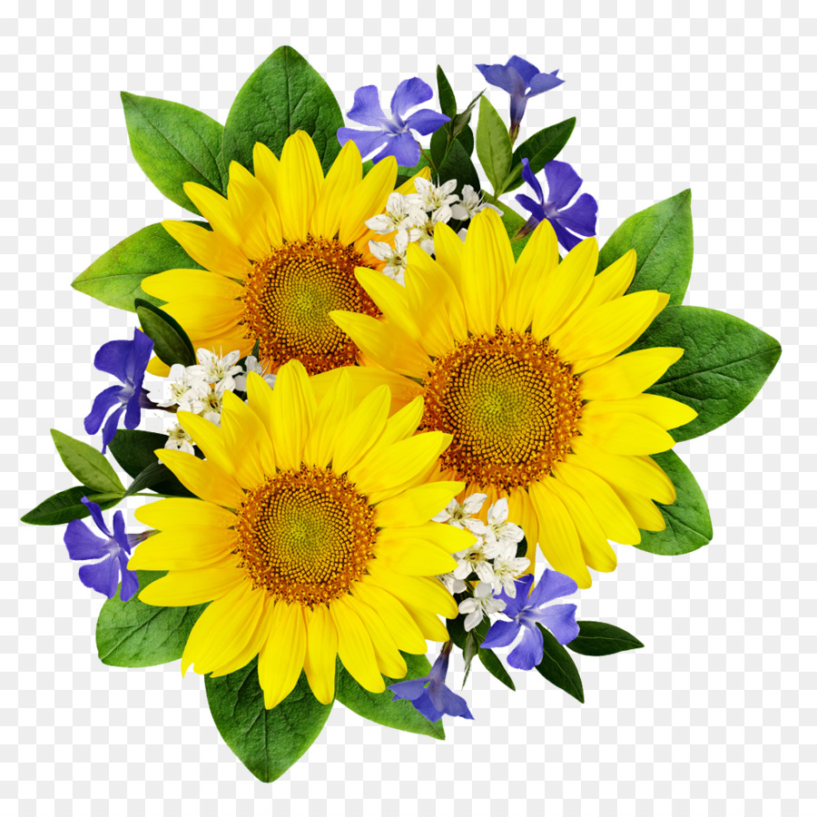 Common sunflower stock photography flower bouquet sunflower png common sunflower stock photography flower bouquet sunflower izmirmasajfo