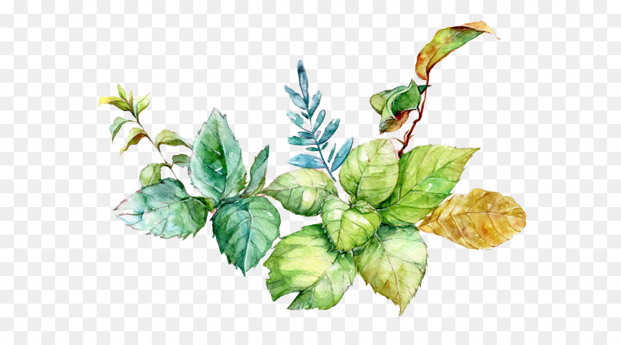 watercolor painting download - mint leaves watercolor picture material png download
