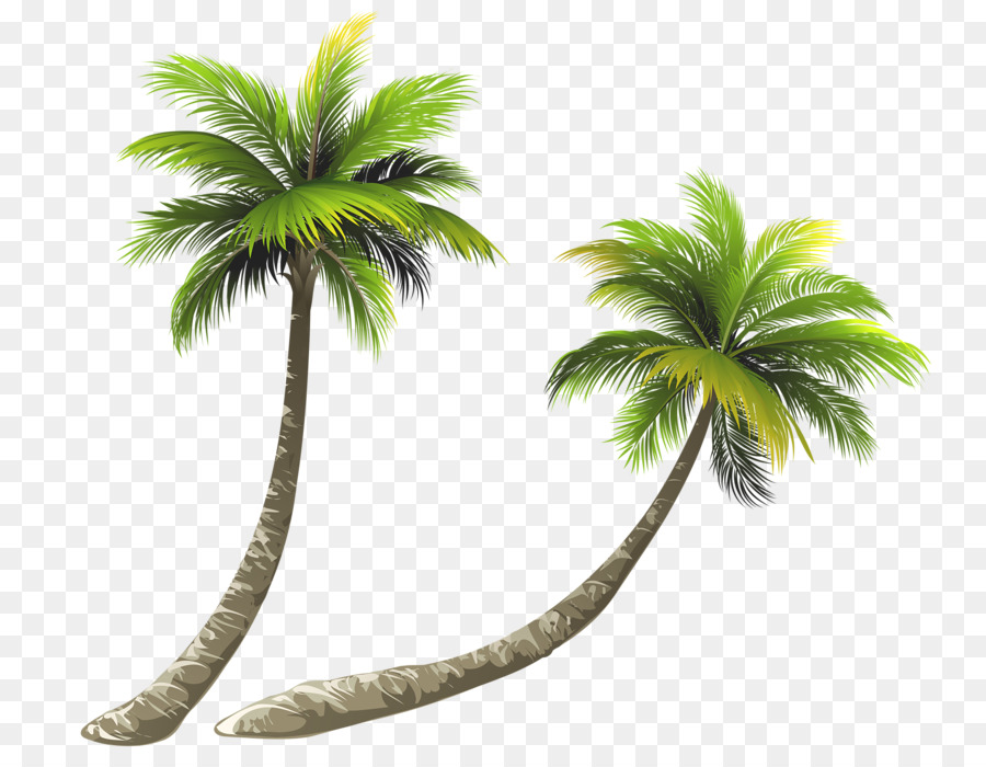 arecaceae coconut royalty free illustration bent coconut clip art pine trees with snow clip art pine tree branch