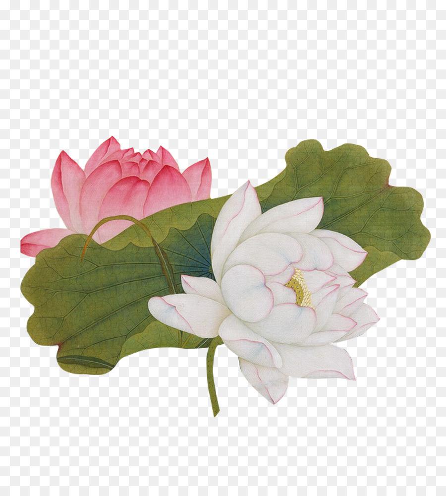 China nelumbo nucifera painting chinese art vector lotus png china nelumbo nucifera painting chinese art vector lotus izmirmasajfo