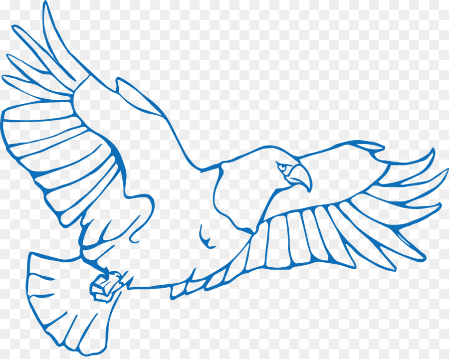 bird drawing illustration hand painted flying eagle png download
