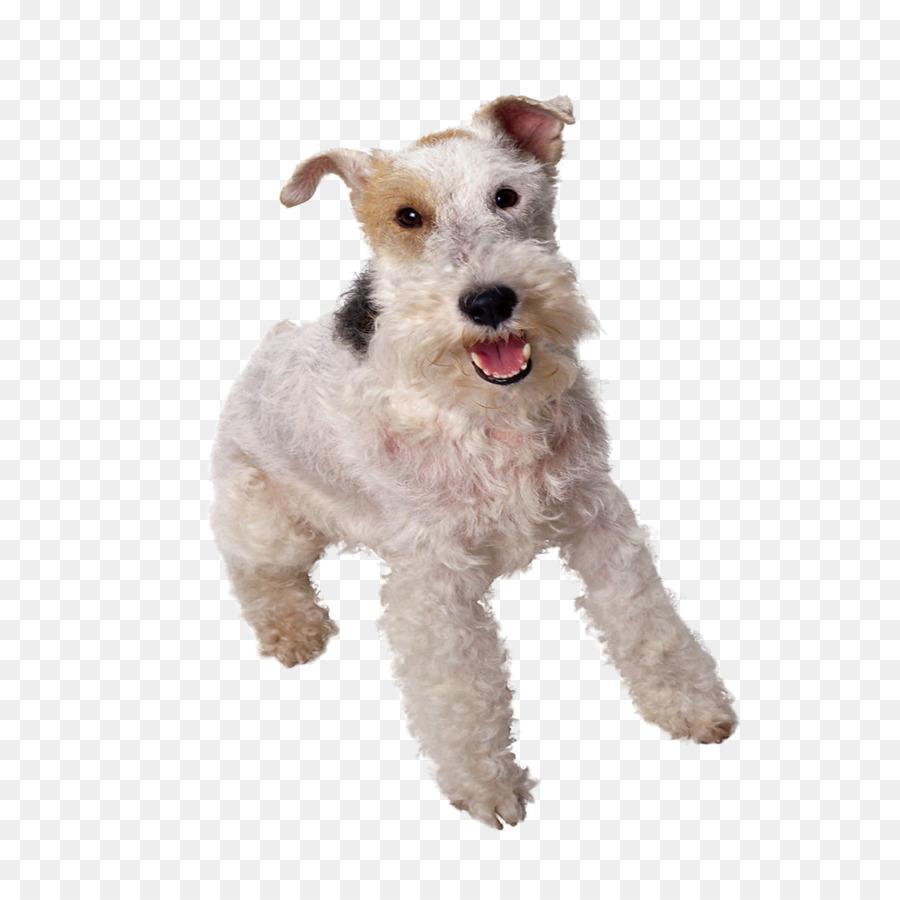 Wire Hair Fox Terrier Yorkshire Terrier Smooth Fox Terrier Toy Fox ...