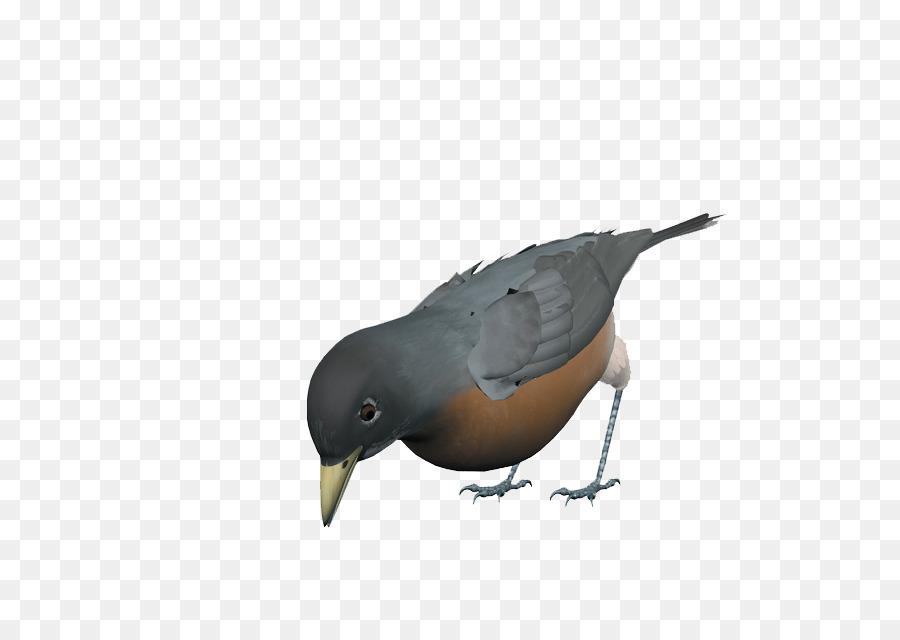 Uccello Eurasiatico Gazza Rock Colomba Becco Grigio