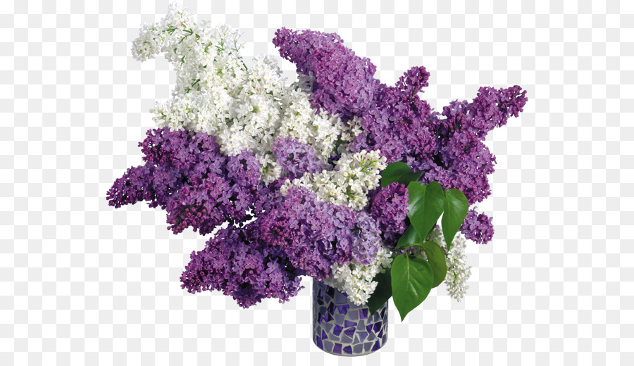 Common Lilac Pink Flowers Wallpaper Vase Png Download 600507