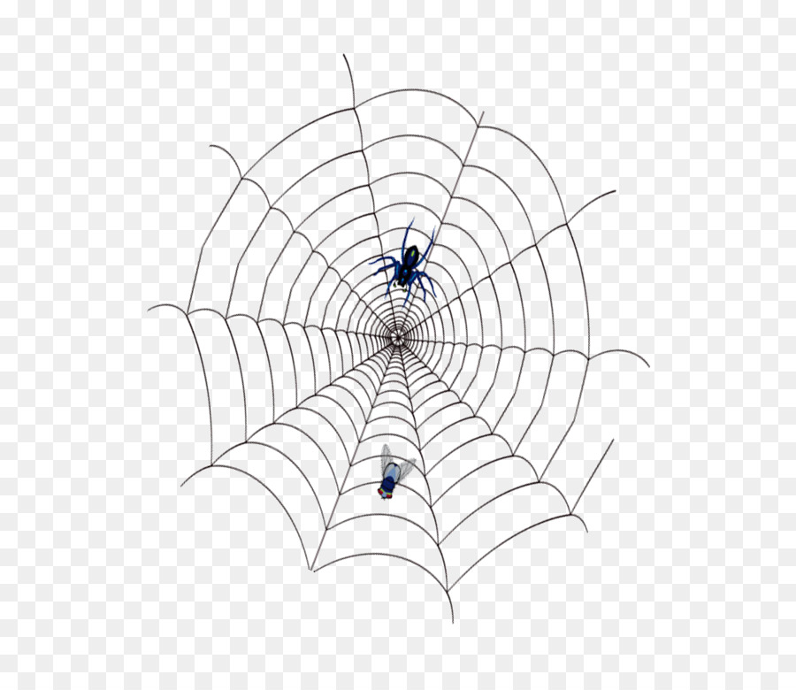 Spider Web Spidercobweb Png Download 696772 Free Transparent