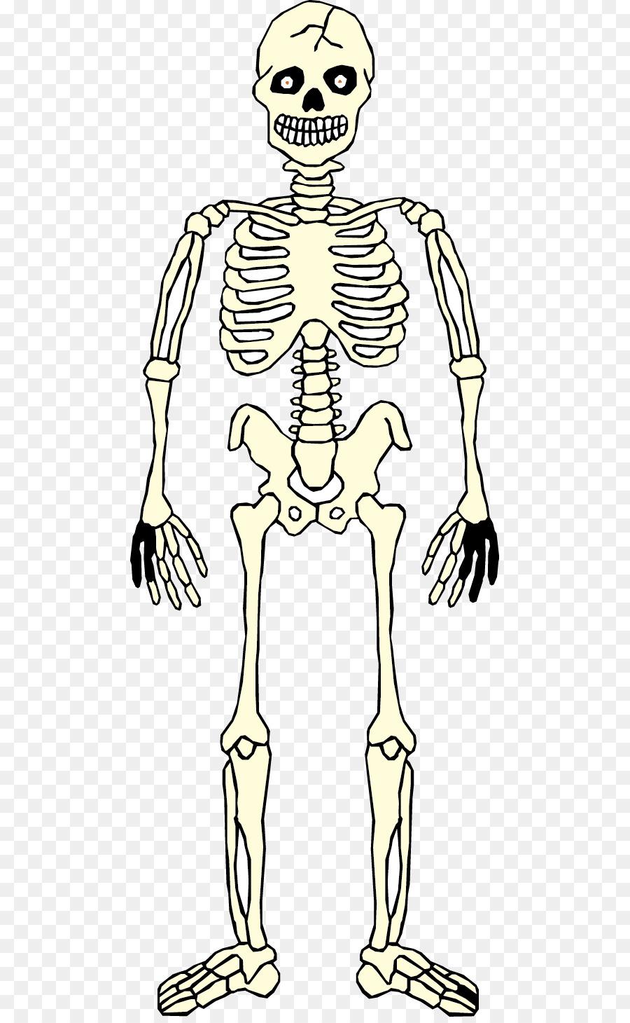 Homo Sapiens Skeleton Hand Human Anatomy Human Body Human Skull