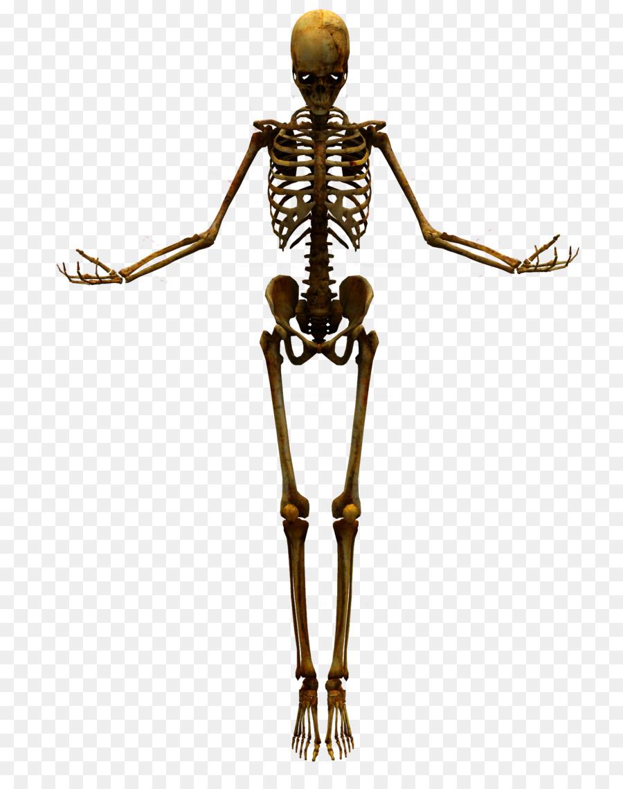Human Skeleton Skull Bones Png Download 16002000 Free