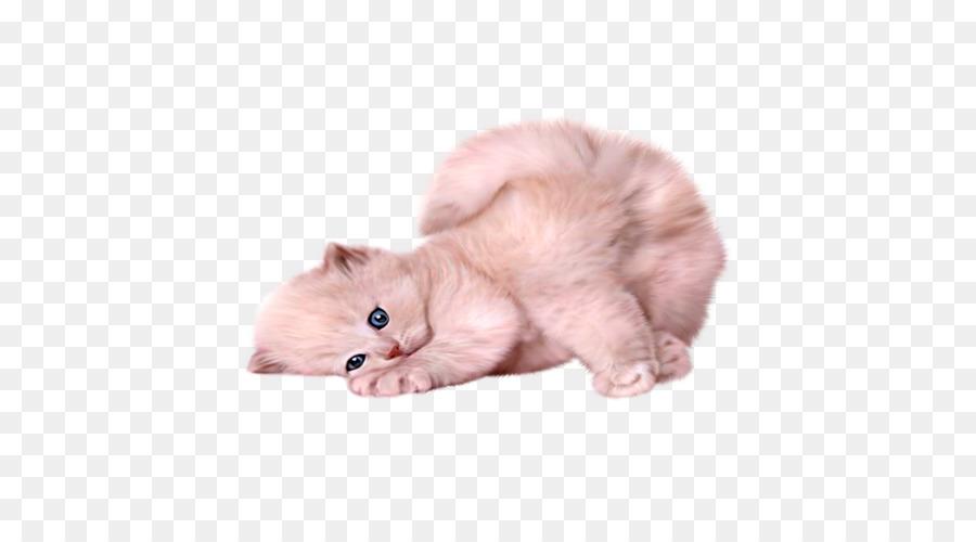 Persian Cat Siamese Cat Himalayan Cat Turkish Angora Kitten Kitten