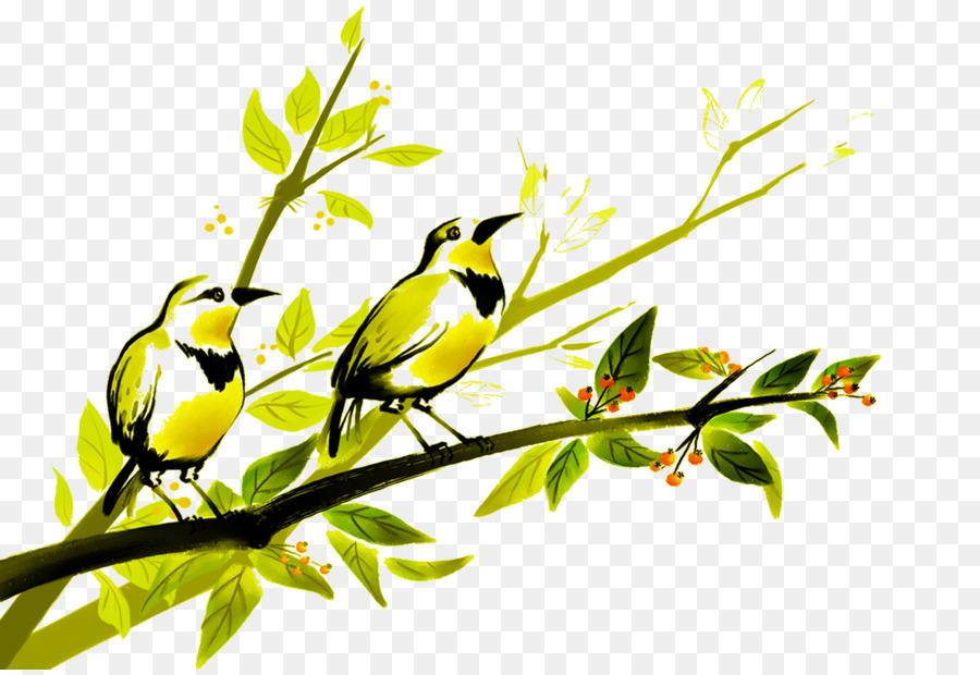 Kuş Boyama Papağan Fotoğraf Illüstrasyon Kuşlarkuşlar Png Indir