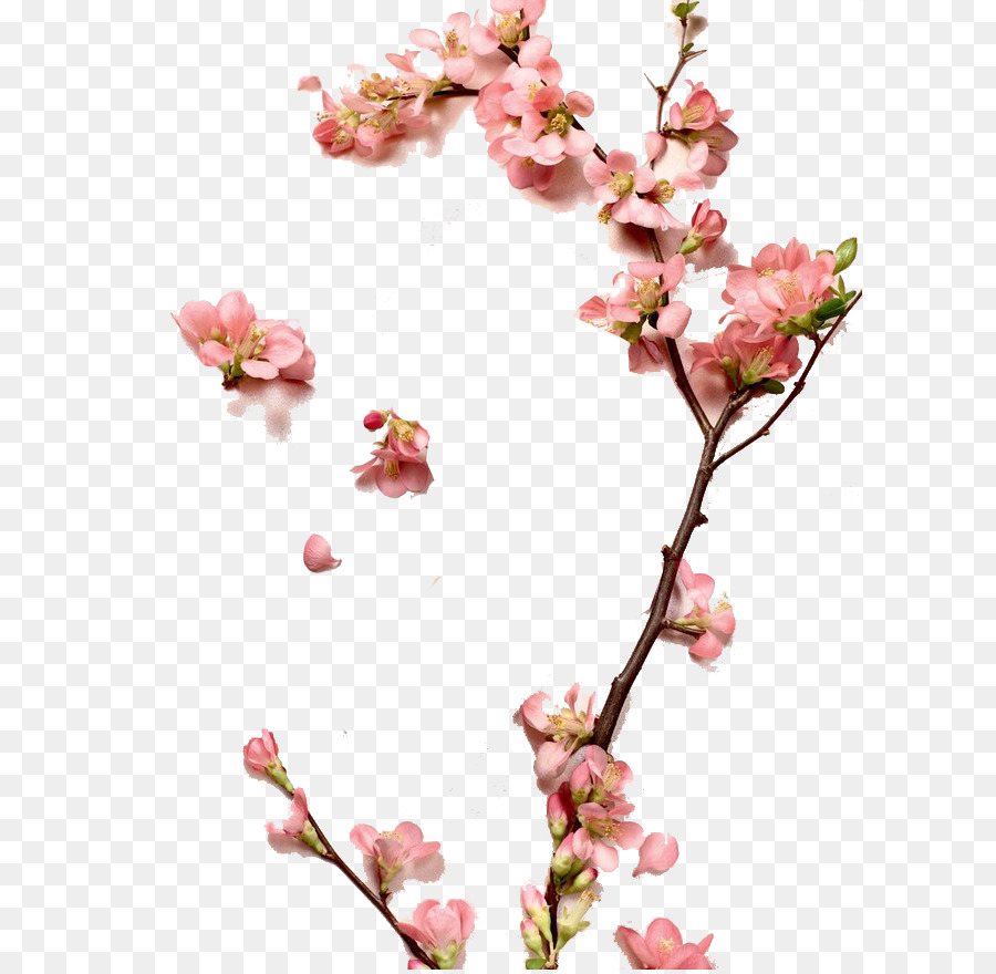 Zhangzhou Cosmetics Peach Designer A Peach Png Download 658876