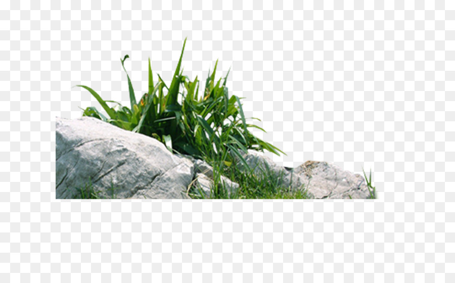 Superbe Download Living Stone   Stone,grass