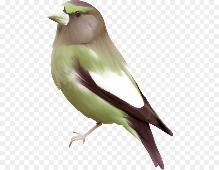 Unduh 67  Gambar Burung Terbang Lukisan  Terbaik