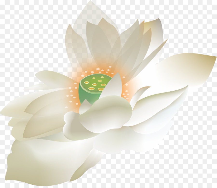 Floral Design Petal Computer Wallpaper Lotus Png Download 6082