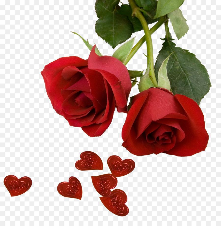 best roses screensaver wallpaper rose photos png download 1500