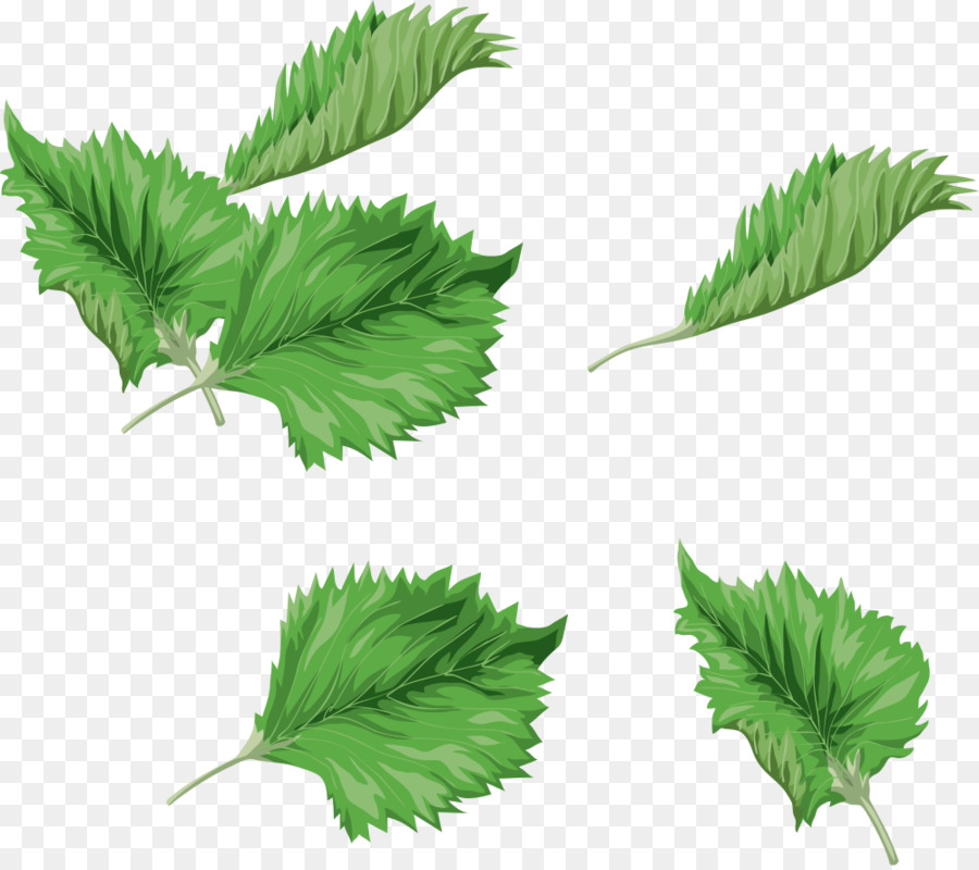Hoja Verde de la pintura a la Acuarela Clip art - Acuarela hojas de ...