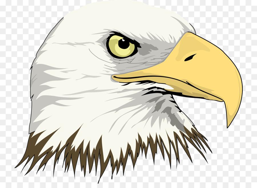 Águila calva Dibujo Clip art - Águila De Cabeza Formatos De Archivo ...
