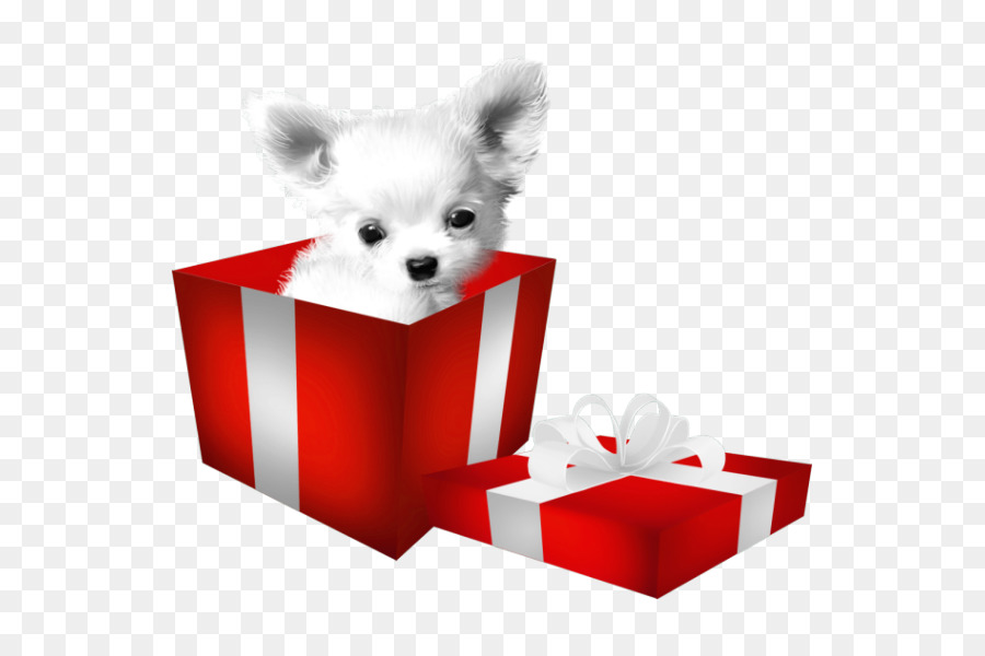 chihuahua bulldog beagle dogo argentino puppy the puppy in the box