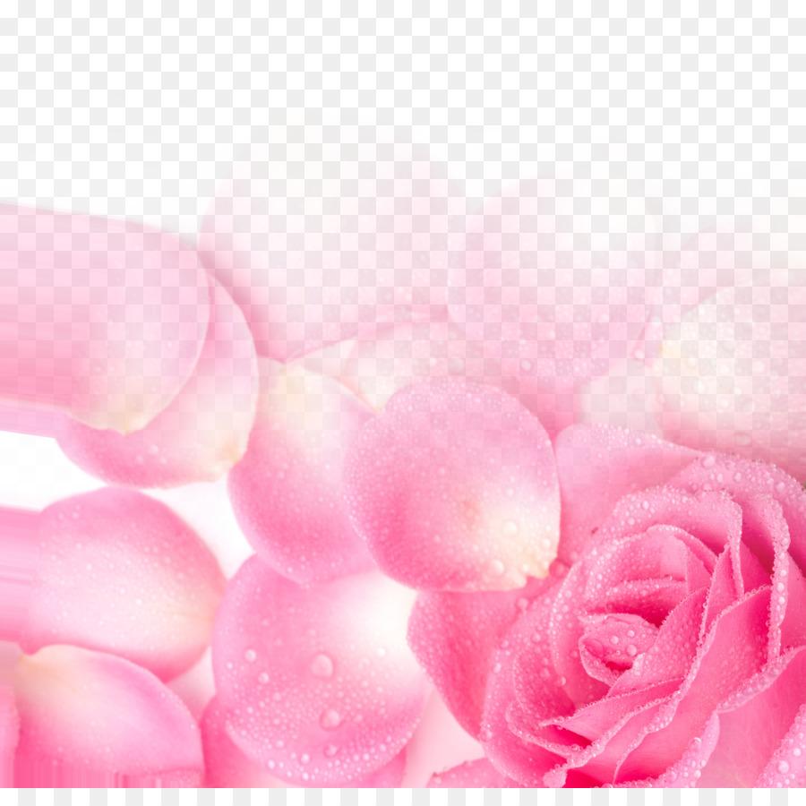 Garden Roses Pink Petal Wallpaper