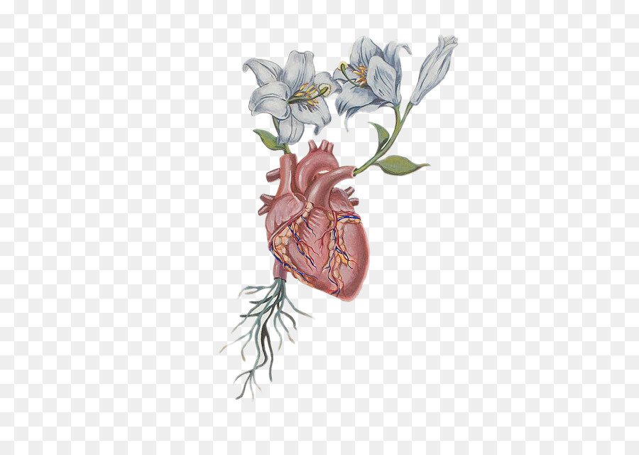 Heart Flower Drawing Anatomy - Heart Flower png download - 454*640 ...