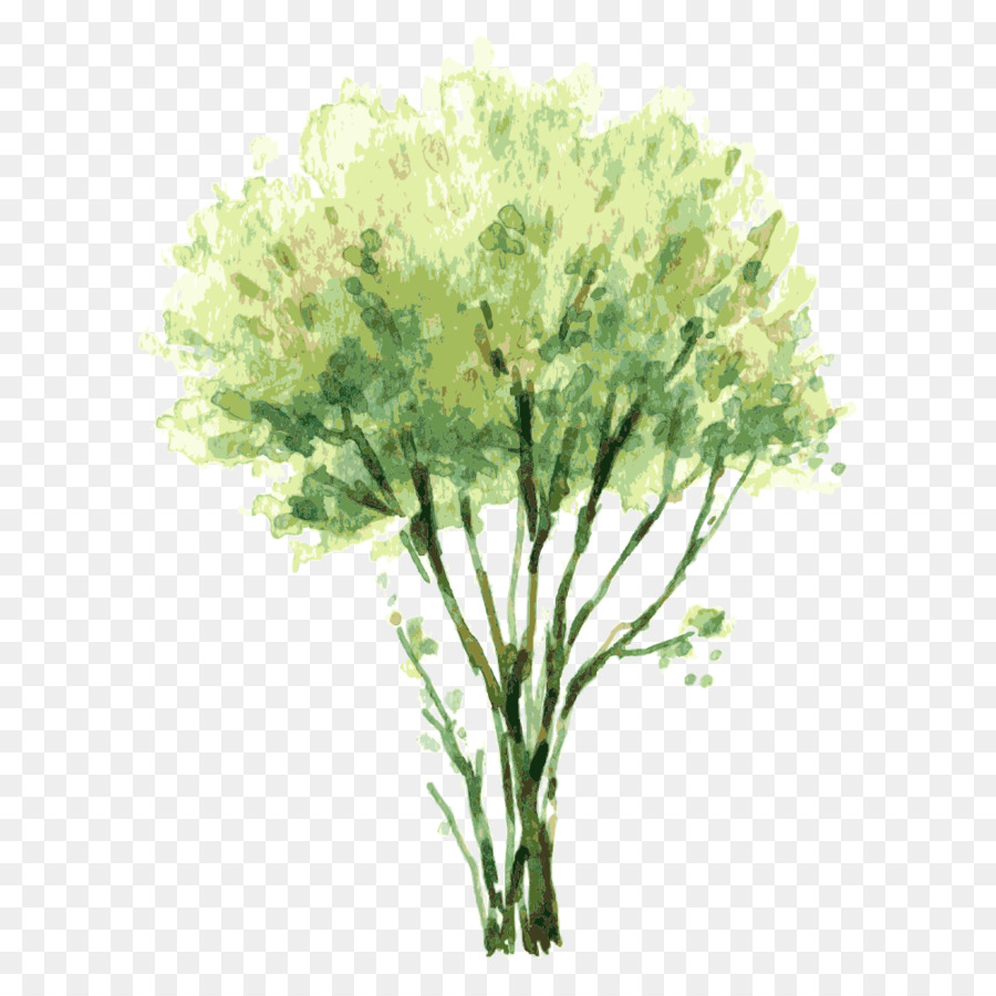 Watercolor painting Tree Shrub Illustration - tree,Trees png ...