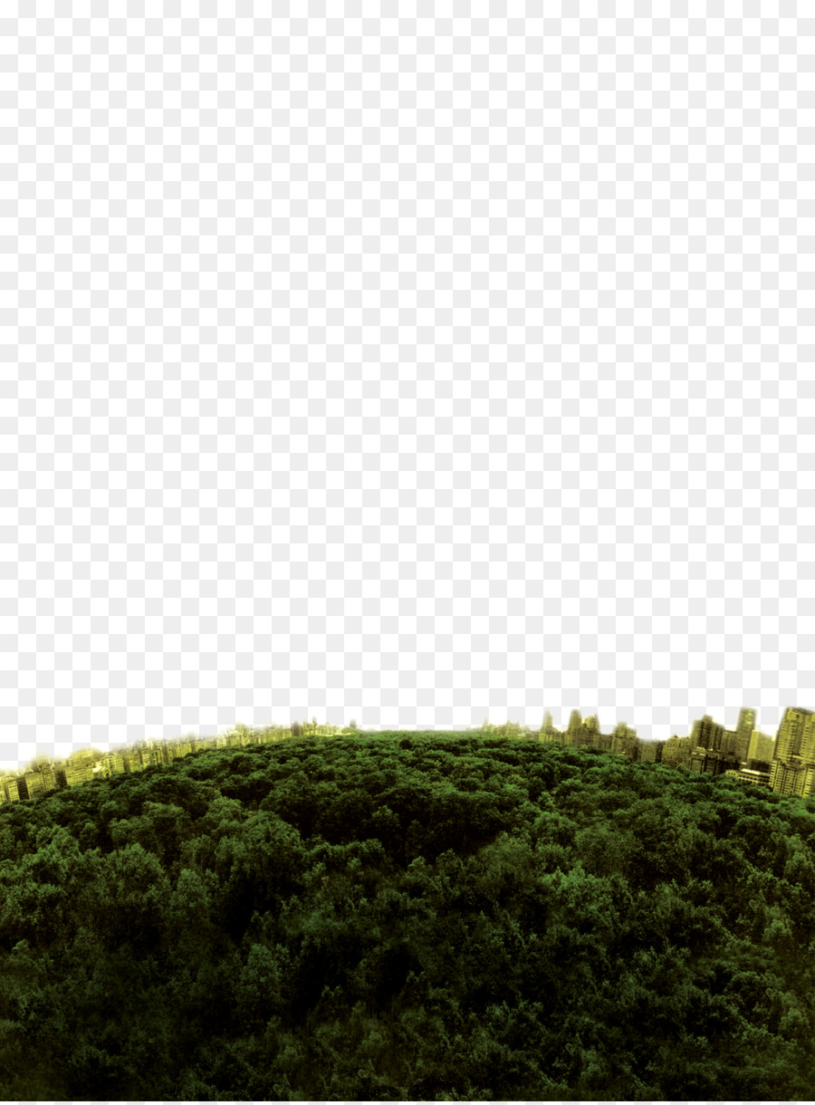 Deep forest amazonia deep forest скачать песни.