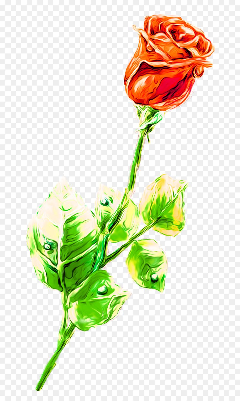 Rosa Beach Dibujo De La Flor De Lápiz De Color Rosa Png Dibujo